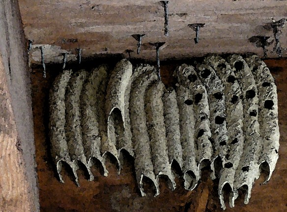 Wasp Nest at a park shelter.