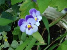 August Garden2011 019