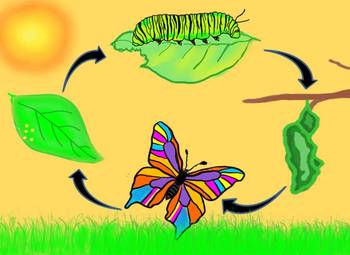 egg-clipart-butterfly-life-cycle-9.jpg
